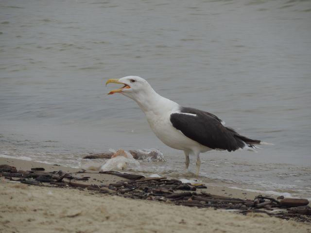 Jeden z głodomorów czekających na połów