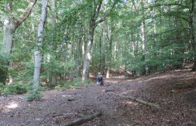 Woliński Park Narodowy to idealne miejsce na piesze i rowerowe wędrówki