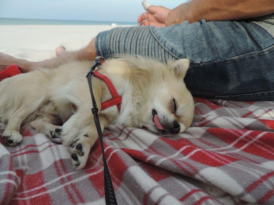 Dyzio smacznie śpi na plaży